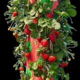 Topsy Turvy - mod ingenios de a planta capsuni, rosii, flori