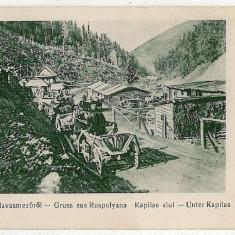 2606 - MARAMURES, Poienile de sub Munte  - old postcard, real PHOTO - unused, Necirculata, Printata