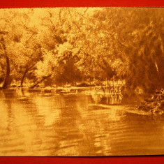 Carte postala - ROMANIA, Societatea Comerciala Oficiala de Turism - In Balta Brailei