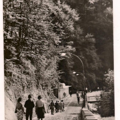 Carte postala(ilustrata)-OLANESTI-Spre izvorul nr.4 - Carte Postala Oltenia dupa 1918, Circulata, Fotografie