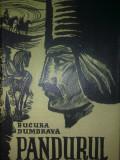 BUCURA DUMBRAVA - PANDURUL