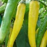 """Seminte ardei iute chili """" Golden Cayenne """" -soi pretios, pentru cunoscatori"""