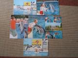 Delfinariu constanta lot colectie 6 vederi carti postale necirculate RSR hobby, Necirculata, Printata, Romania de la 1950