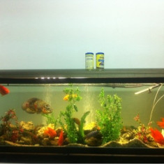 Vand acvariu 486 litri plus 16 pesti diferite specii - Acvariu si terariu