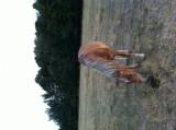Vand iapa