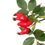 Ulei de măceșe (trandafir sălbatic) 100 ml.Bio, Nefiltrat, Presat la rece.Calitate VOM FASS - Ulei relaxare