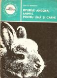Iepurele angora, animal pentru lina si carne