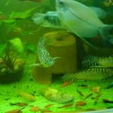 Vand pesti exotici