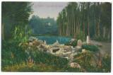Anii 1920 ROMANIA Ramnicul Valcea carte postala ilustrata Cascada din Zavoi, Necirculata, Printata