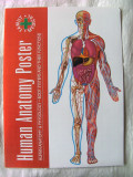 """HUMAN ANATOMY POSTER. Human Anatomy & Physiology. Body Systems and Their Functions"", Poster Anatomie si Fiziologie. Text in engleza. Absolut nou, Alta editura"