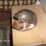 SPARGATOR PTR NUCI, Vase