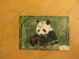 Kinder puzzle Panda