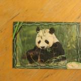 Kinder puzzle Panda - Surpriza Kinder