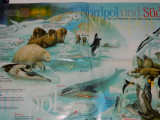 Plansa educativa/poster cu viata polara, animale la Polul Nord, mediul la Pol, educativa