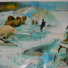 Plansa educativa/poster cu viata polara, animale la Polul Nord, mediul la Pol, educativa - Afis