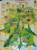 Poster educativ/plansa model cu animale salbatice din jungla si savana