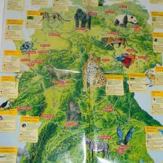 Poster educativ/plansa model cu animale salbatice din jungla si savana - Afis
