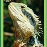 [RAR] Cartonase Mega Image Minunile Planetei - Nr.59 - Cartonas de colectie
