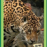 [RAR] Cartonase Mega Image Minunile Planetei - Nr.32 - Cartonas de colectie