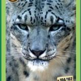 [RAR] Cartonase Mega Image Minunile Planetei - Nr.104 - Cartonas de colectie