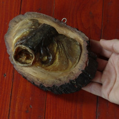 Trofeu - cap de Crap - panoplie lemn !!!