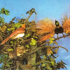 Carte postala CP B020 Bucuresti -Muzeul de istorie naturala Grigore Antipa- necirculata [I] - Carte Postala Muntenia dupa 1918