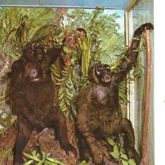 Carte postala CP B017 Bucuresti -Muzeul de istorie naturala Grigore Antipa- necirculata [I] - Carte Postala Muntenia dupa 1918