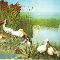 Carte postala CP B015 Bucuresti -Muzeul de istorie naturala Grigore Antipa- necirculata [I] - Carte Postala Muntenia dupa 1918
