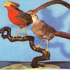 Carte postala CP B018 Bucuresti -Muzeul de istorie naturala Grigore Antipa- necirculata [I] - Carte Postala Muntenia dupa 1918