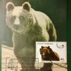 Maxima Urs Brun - Ocrotiti Fauna Padurilor + timbru pe spate