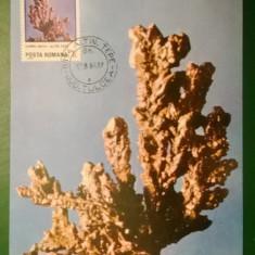 Maxima Flori de mina - Cupru nativ