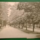 COVASNA - Panorama - Circulat - Timbrat
