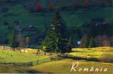 Carte postala Bucovina SV053 Sadova - Toamna la Sadova - necirculata [I]