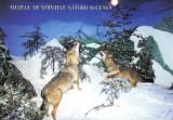 Carte postala Bucovina SV045 Suceava - Muzeul de Stiinte ale Naturii - necirculata [I]