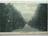 RAMNICU VALCEA - VEDERE PE CAPELA