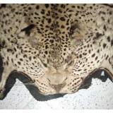 Blana de jaguar Africa de sud