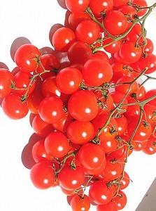 "Seminte rosii cherry ""Riesentraube"" foto"