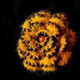 Brosa crosetata (cu margele)