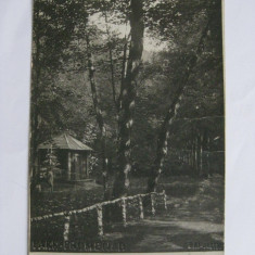 REDUCERE 10 LEI! C.P. ZIZIN-BAI DIN 1923