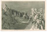 Carte postala- BUCEGI-Peisaj de iarna