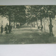 C.P.CAMPULUNG, MUSCEL- ALEA PRINCIPELE CAROL -1927 - Carte Postala Muntenia dupa 1918, Circulata