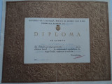 Diploma sportiva- baschet 1964