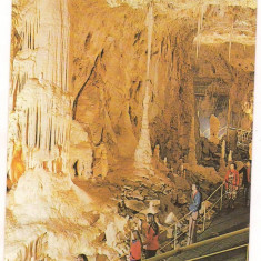 Carte postala(ilustrata)- BIHOR-Pestera Ursilor
