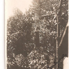 FOTO 15 FOTOGRAFIE BARBAT SUB BOLTA DE VITA DE VIE, IMBRACAMINTE DE EPOCA, DATATA 1931, DIMENSIUNI PRODUS : 8X13 cm, TANAR, Natura, Romania 1900 - 1950