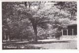 CP Baia Mare-Nagybanya,Parcul-Liget,aprox 1940,necirculata,Fotofilm Kolozsvar
