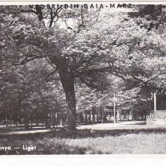 CP Baia Mare-Nagybanya, Parcul-Liget, aprox 1940, necirculata, Fotofilm Kolozsvar