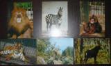 FAUNA. ANIMALE SALBATICE. 6 ILUSTRATE MNH (V12), Necirculata, Fotografie