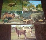 ROMANIA - FAUNA. ANIMALE SALBATICE. 6 ILUSTRATE COLOR MNH (I12), Necirculata, Fotografie