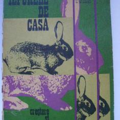 Al. Georgeoni, s.a. - Iepurele de casa, Crestere si valorificare (1982), Alta editura