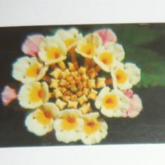 Cartela - Flora - Floare - Turcia - 2+1 gratis toate licitatiile - CHA125 - Cartela telefonica straina